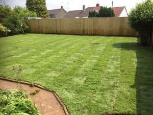 New lawn and privacy wooden fencing