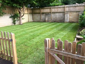 New lawn, picket fence and privacy fence